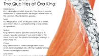 Our King Salmon – The Qualities of Ōra King Appearance King salmon boast bright silver skin. They have a rounder mid-section in comparison to the longer, thinner body of the […]